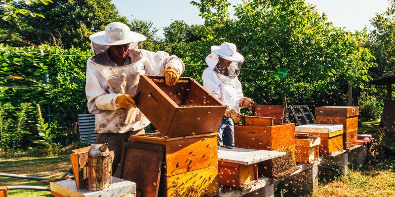 Come-costruire-un-arnia-per-le-api-domestiche