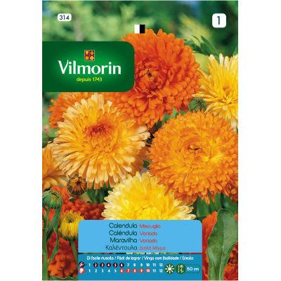 Semi da fiore Calendula: prezzi e offerte online