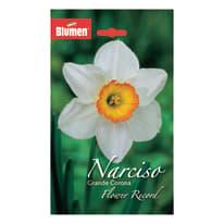 Narciso grande corona Flower record