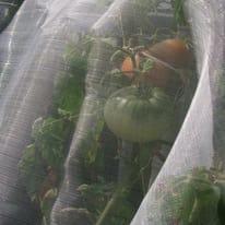 Rete anti insetti Microfender trasparente 2 x 5 m