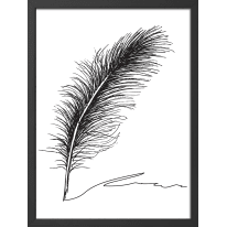 Stampa incorniciata Piuma 50 x 70 cm