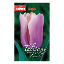 Tulipano trionfo Holland beauty