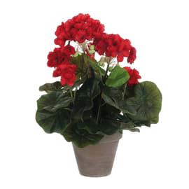 Fiore geranio vaso11 rosso