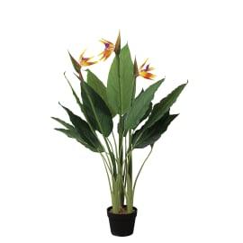 Pianta vaso con Sterilizie per decorazione