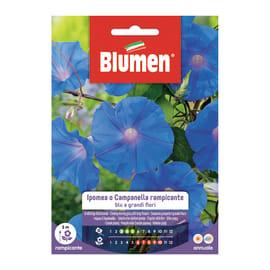 Semi da fiore Ipomea o campanella rampicante blu