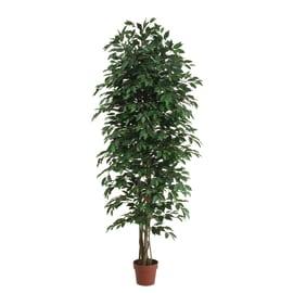 offerte piante e fiori