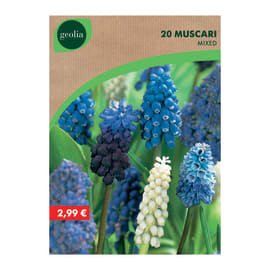 Bulbo fiore GEOLIA Muscari 20 pezzi