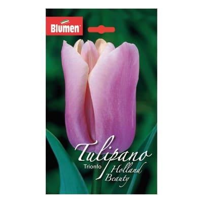Bulbo holland beauty rosa 36 pezzi