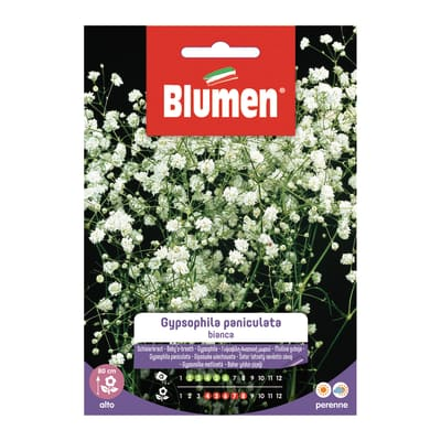 Seme fiore Gypsophila Paniculata bianca nan