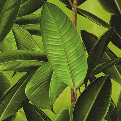 carta da parati giungla verde prezzi e offerte online
